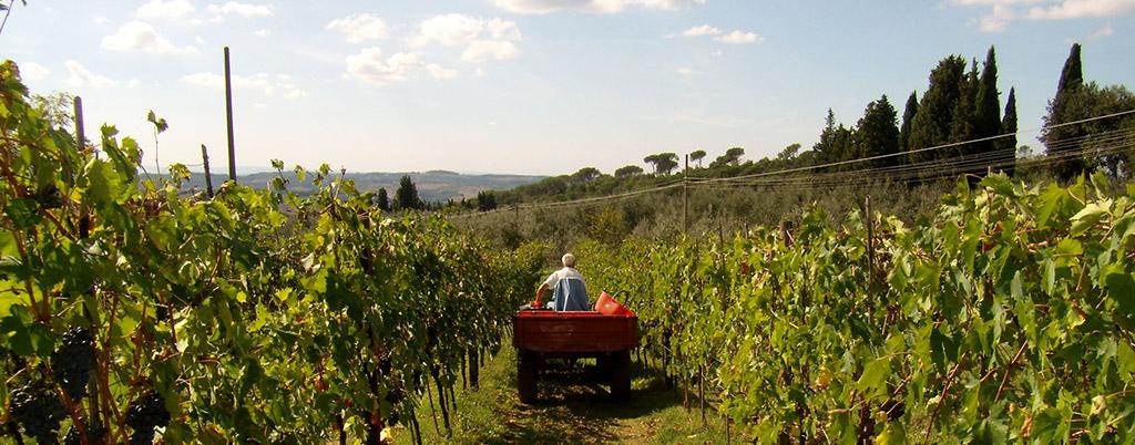 Prodotti azienda agricola a Firenze